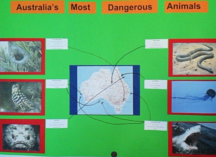 Australias Animals