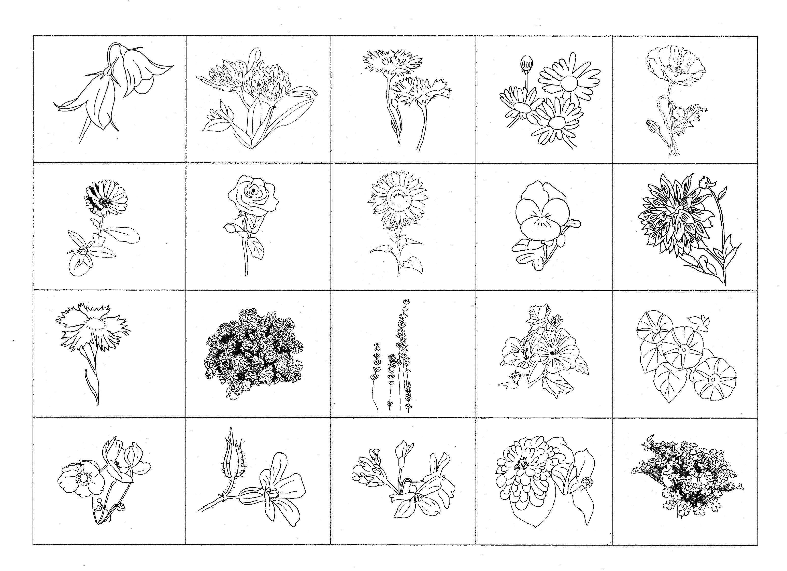 Ungewöhnlich Blume Anatomie Arbeitsblatt Ideen - Menschliche ...