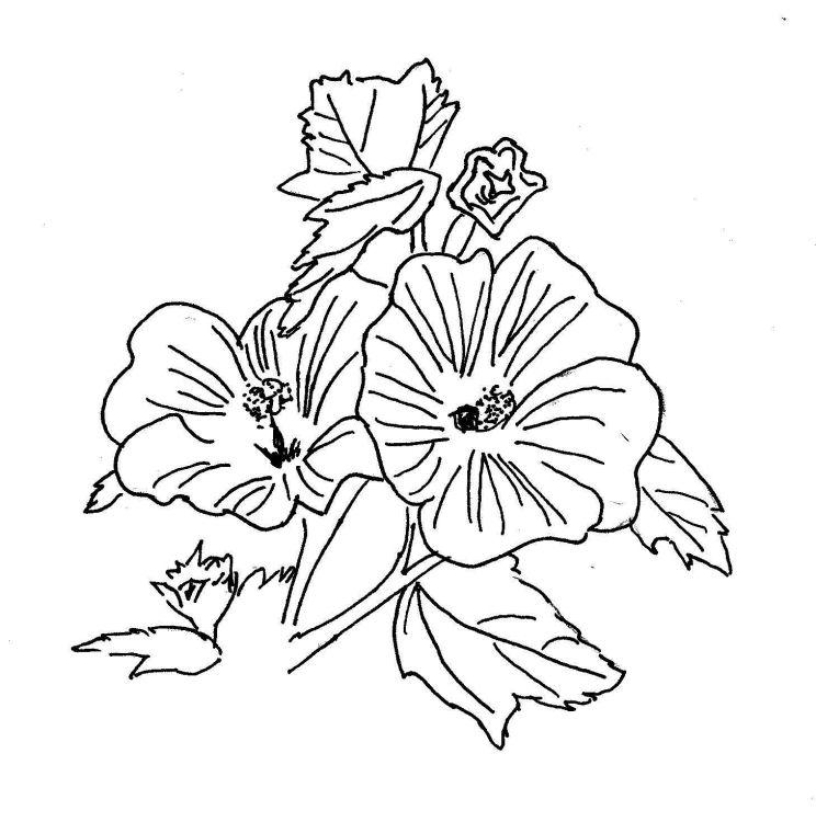 Malvorlagen Sommerblumen Lernzentrum Am Killesberg